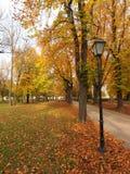 Autmn в парке Стоковые Фотографии RF
