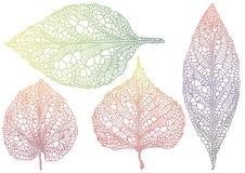 текстурированные листья autmn Стоковое Изображение RF