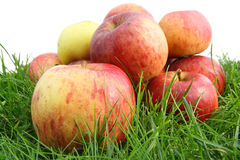 The  autmn  apples  on a grass macro Stock Image