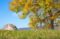 Autmn-Baum und der Stein lizenzfreie stockfotografie