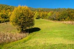 Autmn beautiful landscape. Autumn beautiful landscape near Troyan, Bulgaria Royalty Free Stock Photography