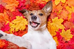 Autmn fall leaves dog selfie Royalty Free Stock Photography