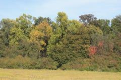 Autmn Forest Stock Image