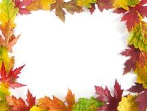 Autmn leaf framework. Fall leaf framework with white copy space stock photography