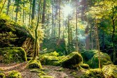 Autmn-Morgen im Wald stockfotos