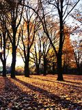 Autmn sidor med solsken Arkivfoto