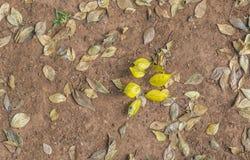 Autmnbladeren op een stoffig flard worden geïsoleerd dat stock afbeelding