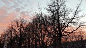 Autmumne-Bäume Lizenzfreies Stockbild