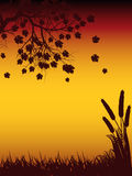 autmun δέντρο σκιαγραφιών καλ&alpha Στοκ Εικόνες