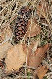 Autmun Forest Ground Fotografie Stock