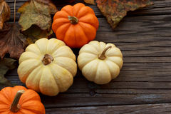 Autmun pumpkins Stock Photos