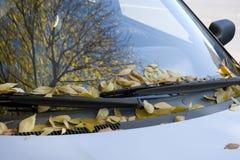 Auto in de herfst stock foto's