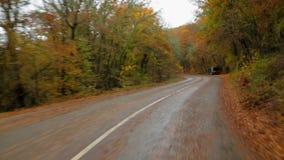 Auto die zich in Autumn Forest Along Winding Road bewegen stock video