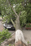 Auto door een gevallen boom op straat wordt vernietigd die royalty-vrije stock afbeeldingen