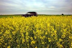 Auto en gele gebieden Royalty-vrije Stock Foto
