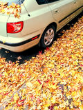 Auto en gouden esdoornbladeren Stock Foto
