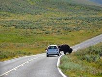Auto-Erträge zum Büffel Stockfoto