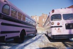 Auto escolares cor-de-rosa Fotografia de Stock