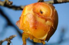 Auto geläuteter Apfel in der Sonne Stockfotografie