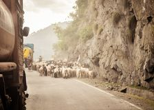 Auto-Gesichtspunktbild Eine Schafherde, die entlang eine Landlandstraße im Himalajagebirgspass in Straße Leh Ladakh Manali von ge stockbild