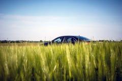 Auto heraus lugend wegen einer hohen jungen Gerste auf dem Himmelhintergrund stockbild