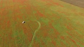 Auto het Drijven in The Field stock footage