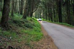 Auto in het magische bos Stock Foto's