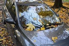 Auto im Laubfall Stockfotos