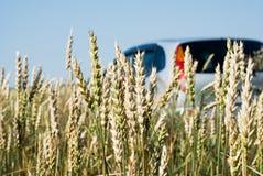 Auto im Weizen Stockfotos