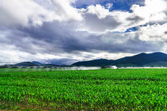 Auto irrigation systems on french rural fields. Agricultural con Stock Photo