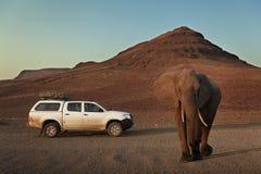 Auto 4x4 nahe einem großen afrikanischen Elefanten Stockfotografie