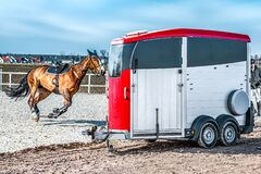 Free Auto Trailer For Transportation Of Horses . Stock Photo - 196869230