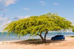 Auto unter Regenschirmbaum auf tropischem Seestrand Stockfotografie