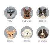 Autoadesivi rotondi del distintivo della razza del cane di animale domestico Fotografia Stock