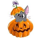 Autoadesivo di vettore di Halloween con il gattino, il ragno e la zucca Immagini Stock