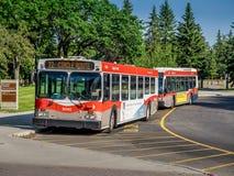 Autobús del tránsito de Calgary imágenes de archivo libres de regalías