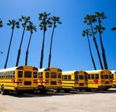 Autobusu szkolnego rząd z Kalifornia drzewek palmowych fotografii górą Zdjęcie Stock