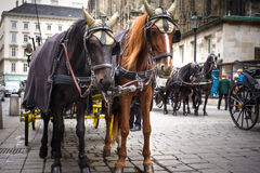 Autocar traditionnel Fiaker de cheval à Vienne Autriche Photographie stock