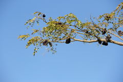 Autochthonous tree. Branches argentina uruguay Stock Photography