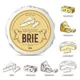 Autocollant créatif pour le brie sur la maquette de fromage rond Illustration de vecteur avec le label de vintage Photographie stock