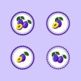 Autocollants de conception avec la prune savoureuse mûre Photo stock