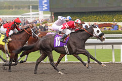 Autocue Wins a Claiming Race Royalty Free Stock Photo