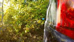Autofahren durch die Landschaft im tiefen Wald stock video footage