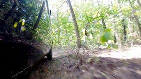 Autofahren im Wald stock footage
