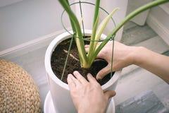 Autoguidez le jardinage images stock