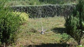 Automático molhando o jardim video estoque