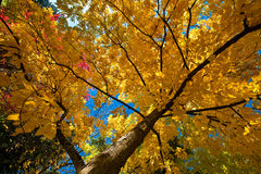 Autom Blätter Stockbilder