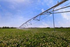 Automated che coltiva il sistema di spruzzatori di irrigazione su fie coltivato Fotografia Stock