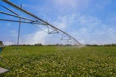 Automated che coltiva il sistema di spruzzatori di irrigazione su fie coltivato Fotografia Stock Libera da Diritti