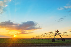 Automated farming irrigation system in sunset Royalty Free Stock Photography